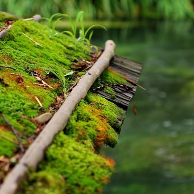 「苔がついた屋根と川」の写真素材