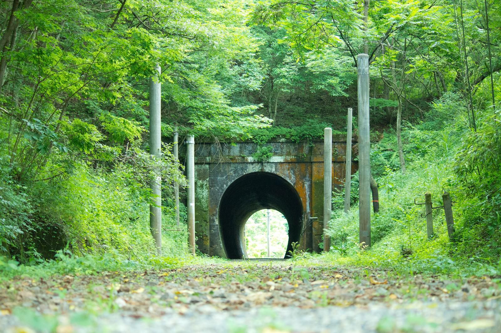 「緑に覆われるトンネル」の写真