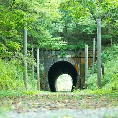 「緑に覆われるトンネル」の写真素材