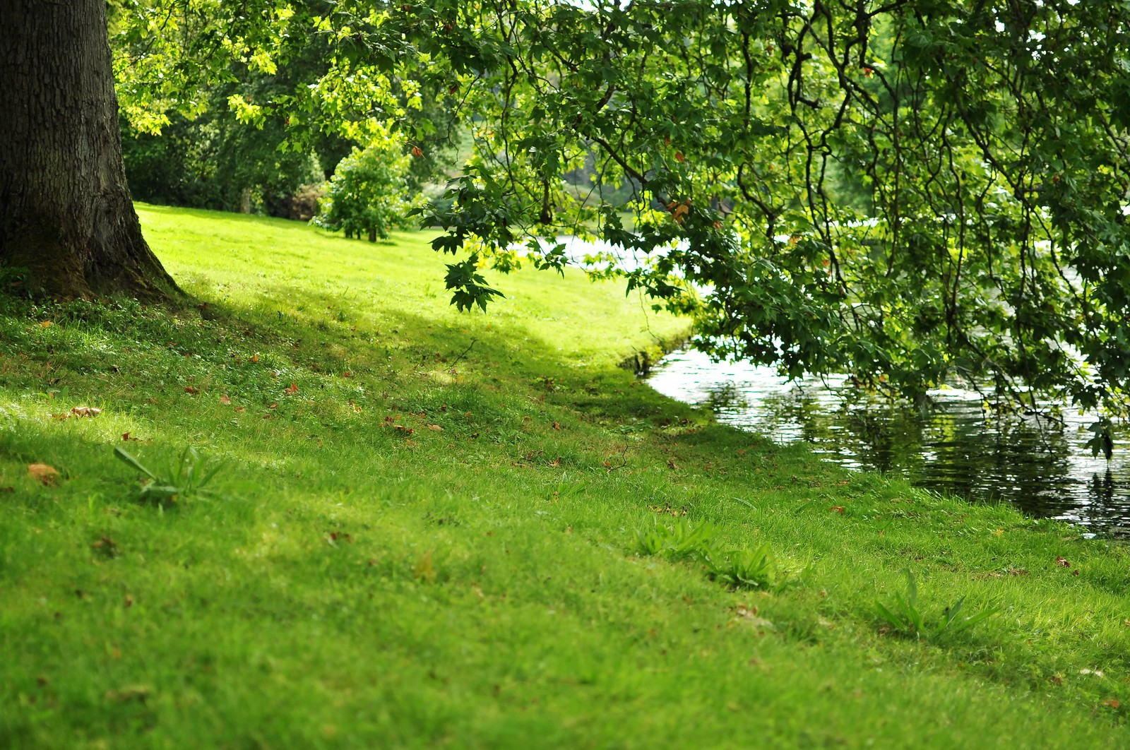 「ストアヘッドの湖のほとり」の写真