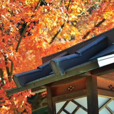 「紅葉と灯篭」の写真素材