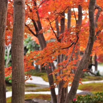 日本庭園の紅葉の写真