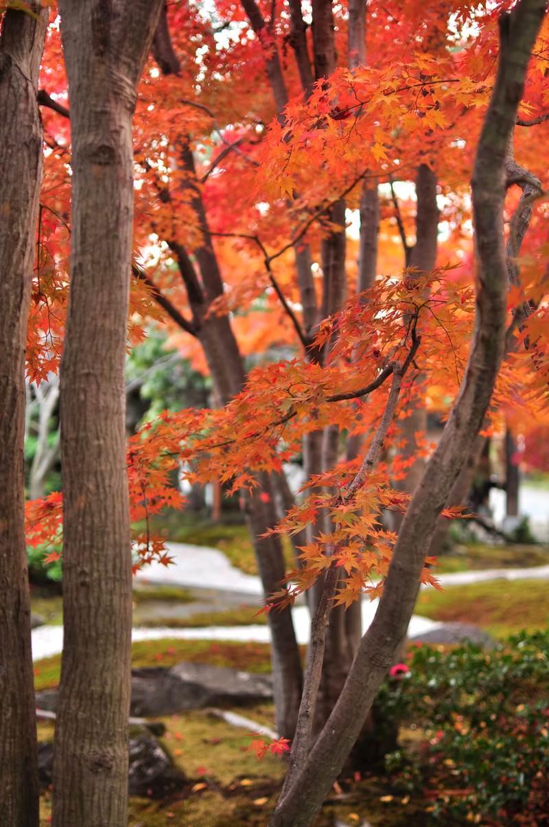 「日本庭園の紅葉」の写真