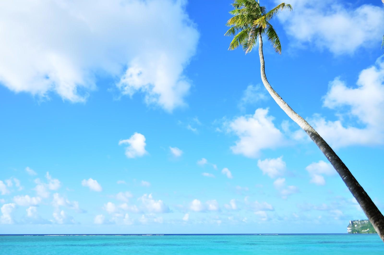 「ヤシと青い海ヤシと青い海」のフリー写真素材を拡大