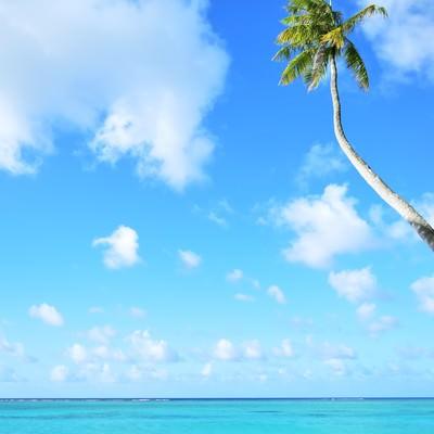 「ヤシと青い海」の写真素材