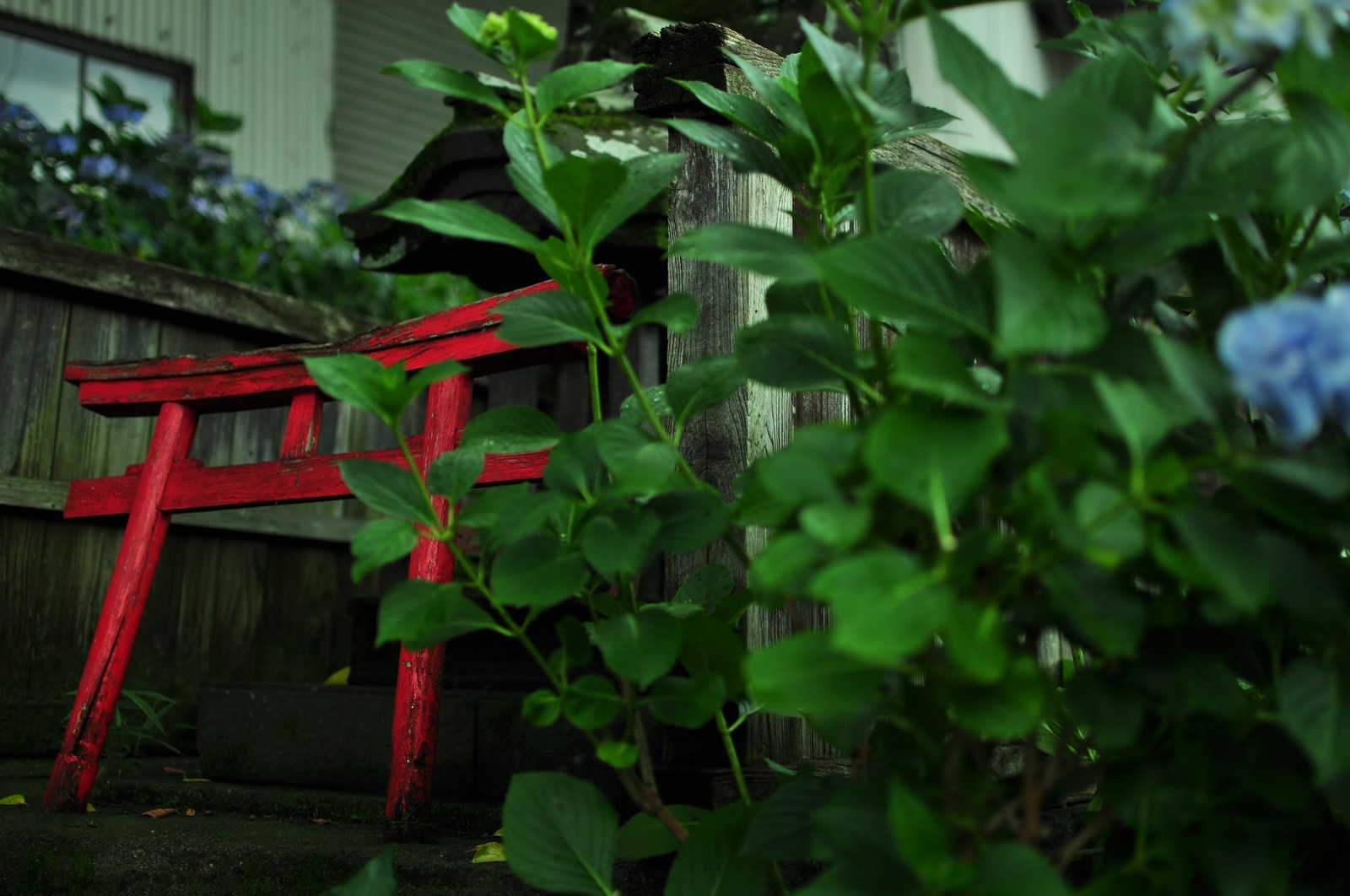 「紫陽花と祠紫陽花と祠」のフリー写真素材を拡大