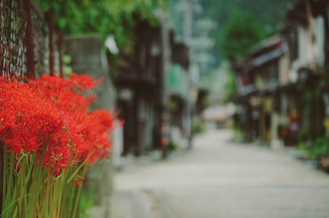 郡上八幡の街並みと彼岸花の写真