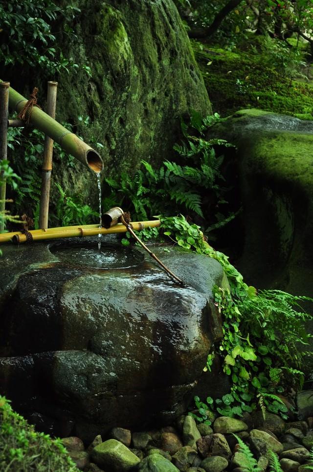 「苔生した手水苔生した手水」のフリー写真素材を拡大