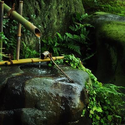 「苔生した手水」の写真素材