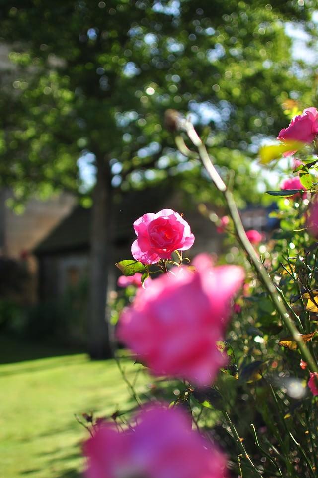 ベイクウェルの街角のバラの写真