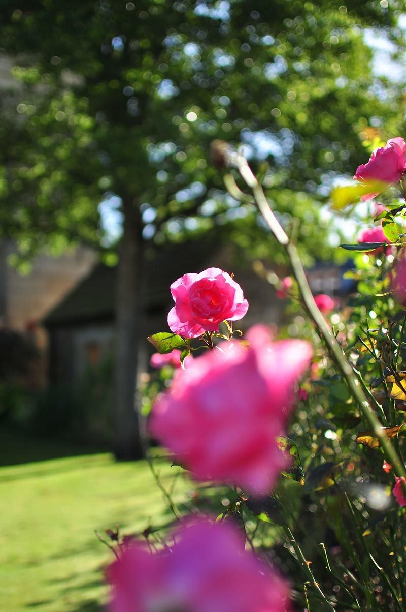 「ベイクウェルの街角のバラ」の写真