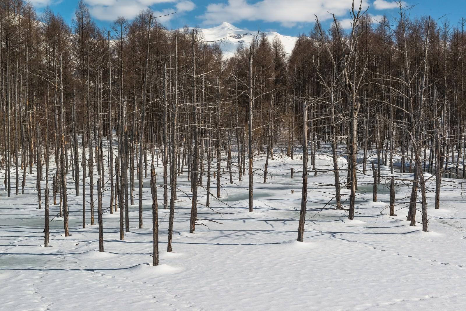 「雪と雑木林」の写真