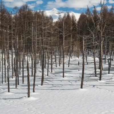 「雪と雑木林」の写真素材
