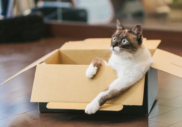 ダンボール箱でくつろぐ猫の写真