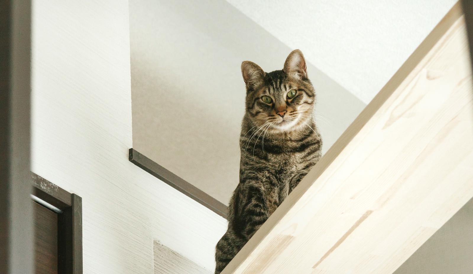 「キャットウォークから見下ろすにゃんこキャットウォークから見下ろすにゃんこ」のフリー写真素材を拡大