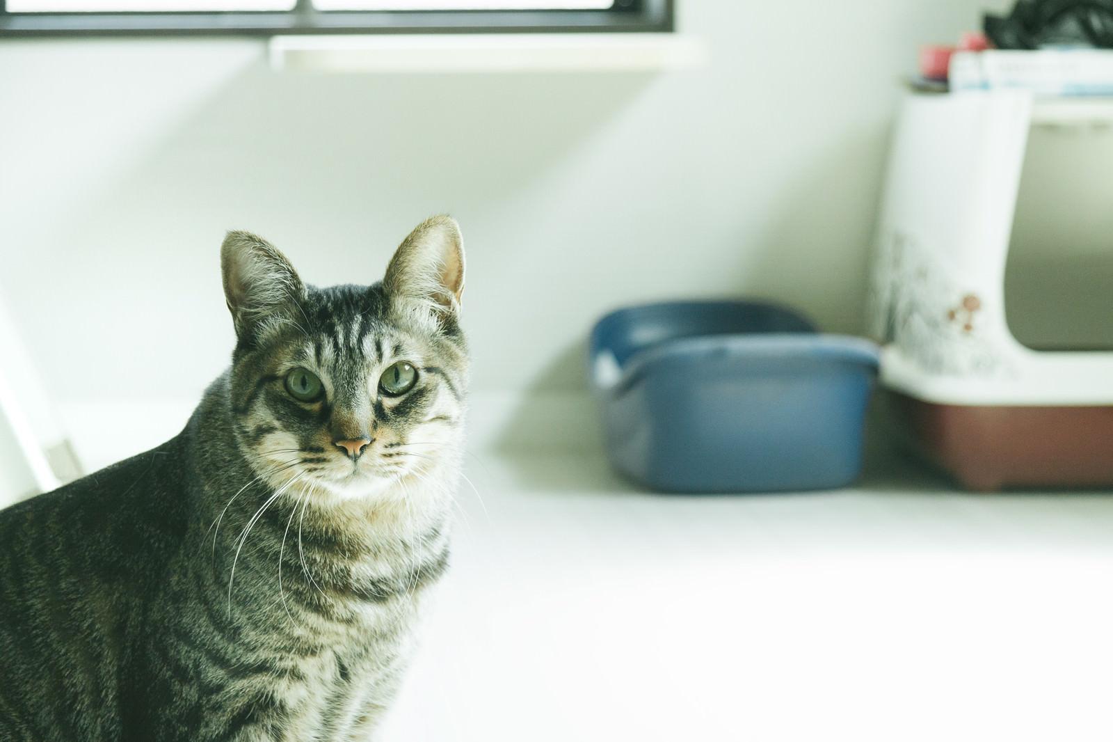 「ご主人の異変を察する猫」の写真