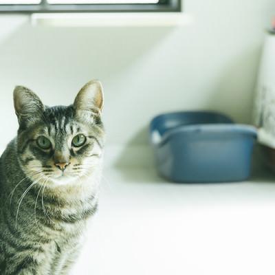 「ご主人の異変を察する猫」の写真素材