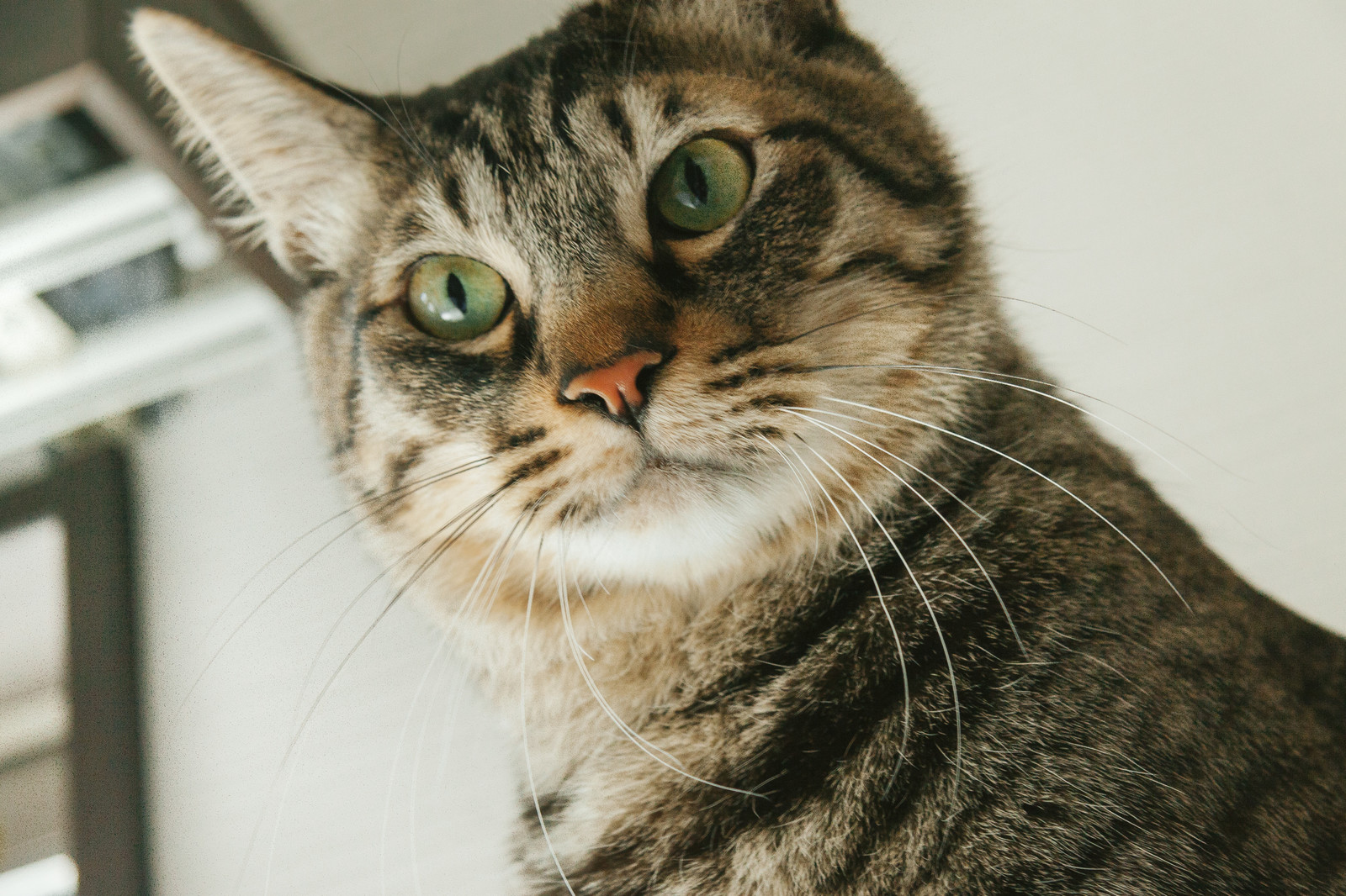 「猫もビックリ」