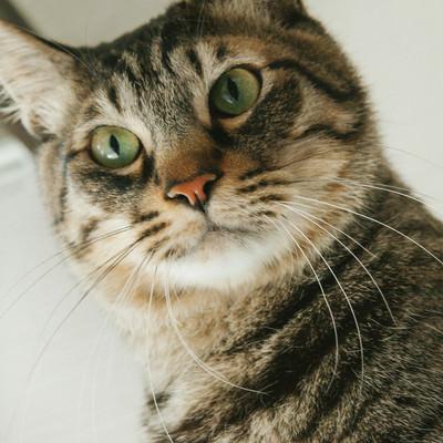 「猫もビックリ」の写真素材
