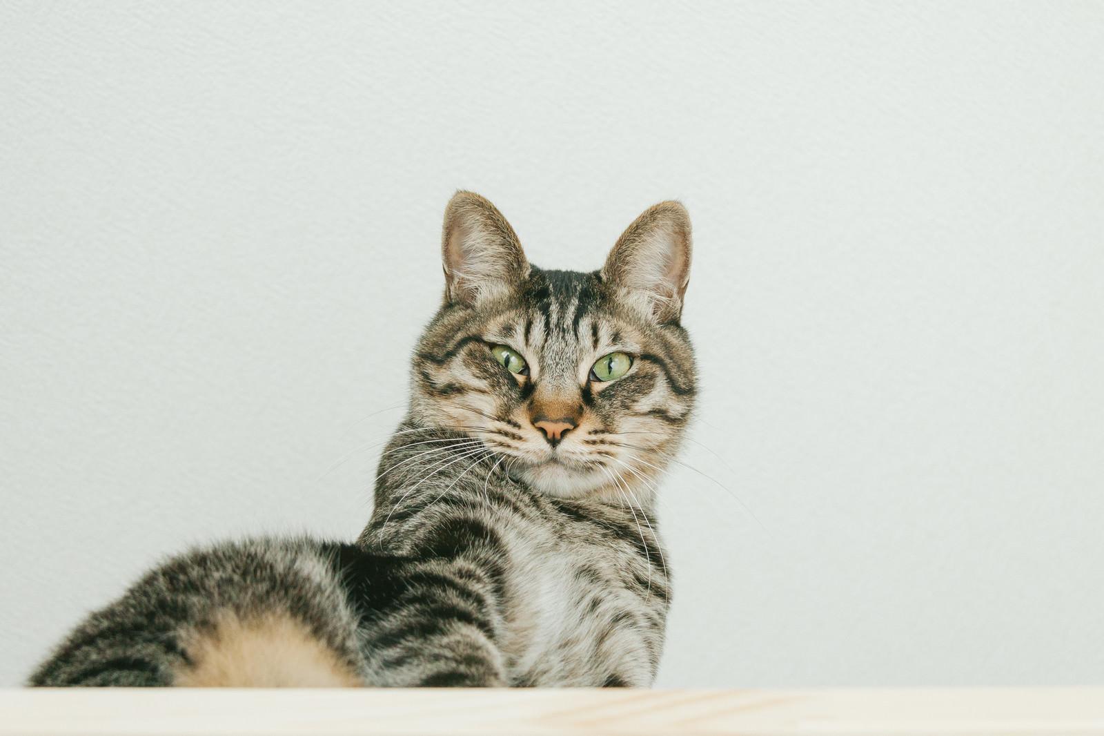 「おれやってません猫おれやってません猫」のフリー写真素材を拡大