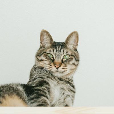 「おれやってません猫」の写真素材