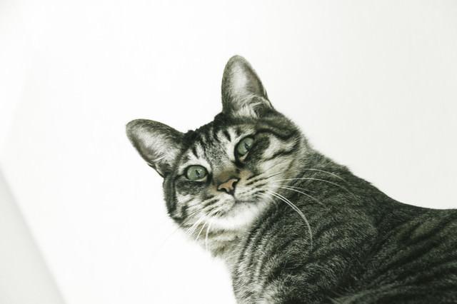振り返りを激写猫の写真