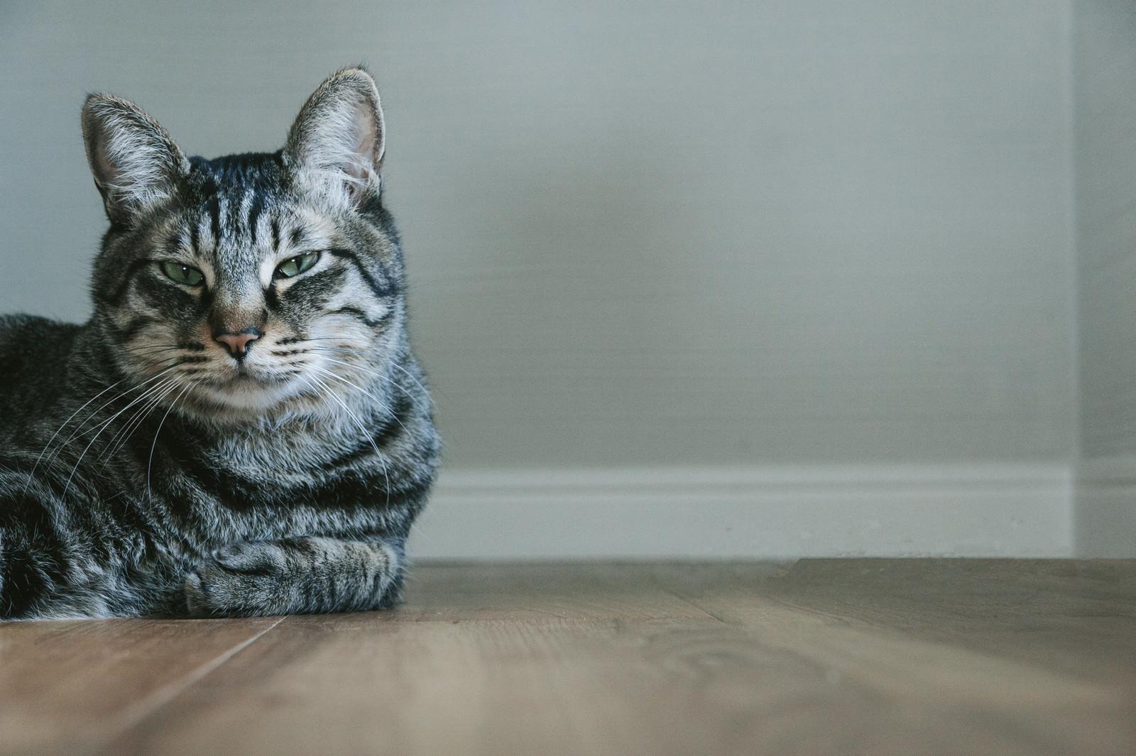 「お前それ猫にも同じこと言えんの?お前それ猫にも同じこと言えんの?」のフリー写真素材を拡大