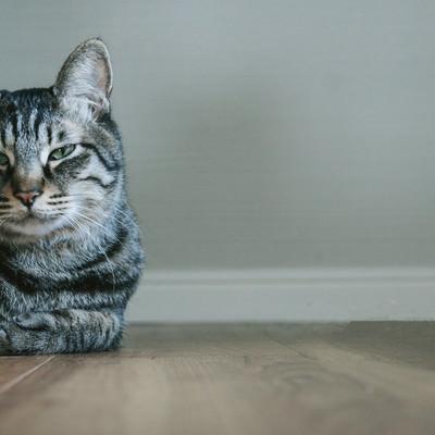 「お前それ猫にも同じこと言えんの?」の写真素材