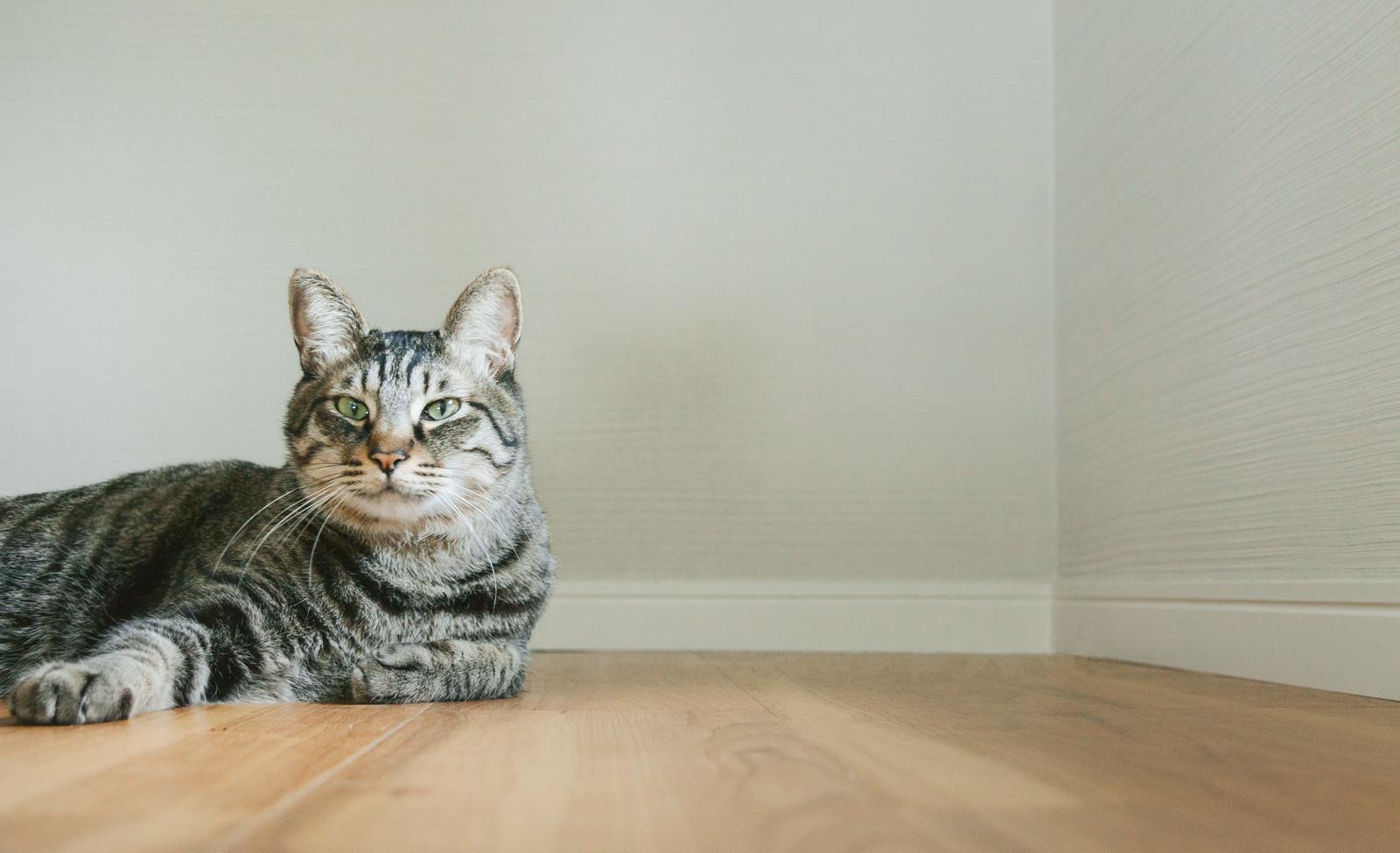 「猫だけど質問ある?猫だけど質問ある?」のフリー写真素材を拡大