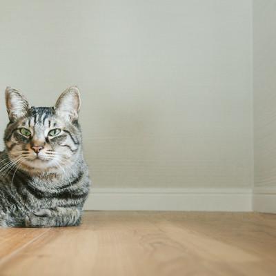 「猫だけど質問ある?」の写真素材