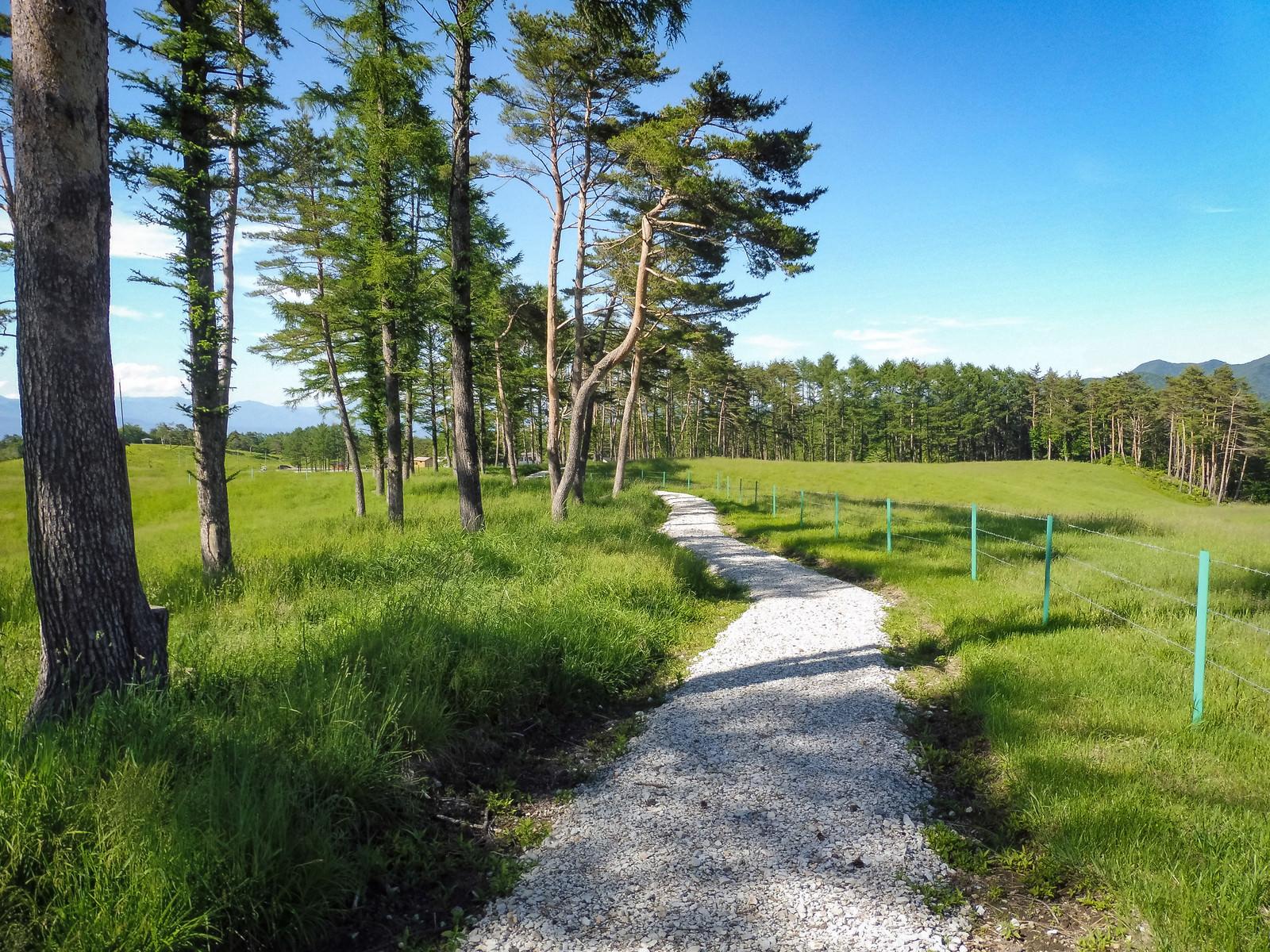 「緑豊かな浅間牧場の遊歩道」の写真