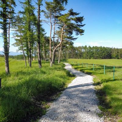 「緑豊かな浅間牧場の遊歩道」の写真素材