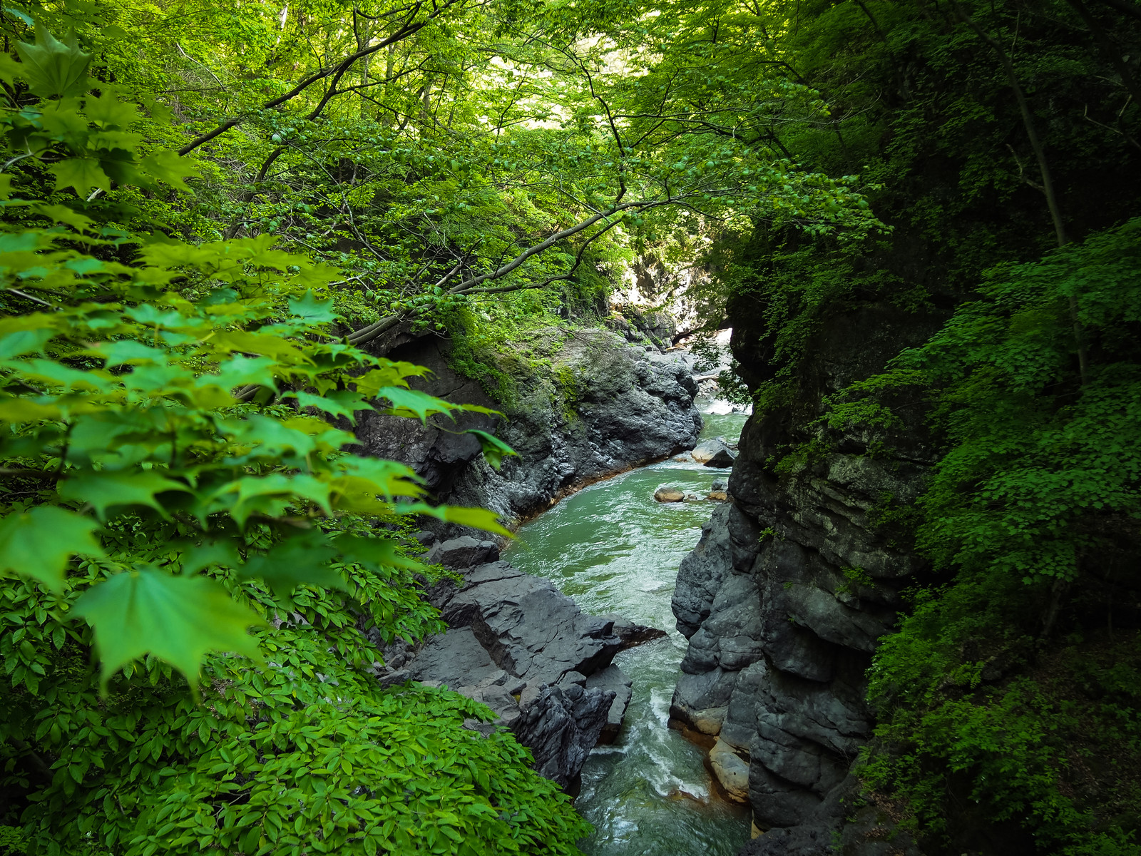 「新緑の吾妻峡(吾妻川)」の写真