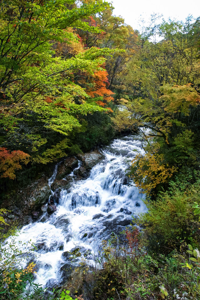 黄葉間近の魚止めの滝の写真