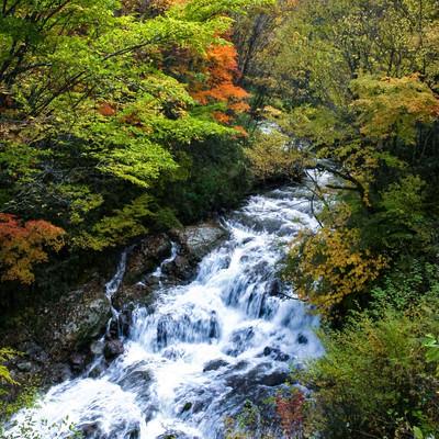 「紅葉間近の魚止めの滝」の写真素材