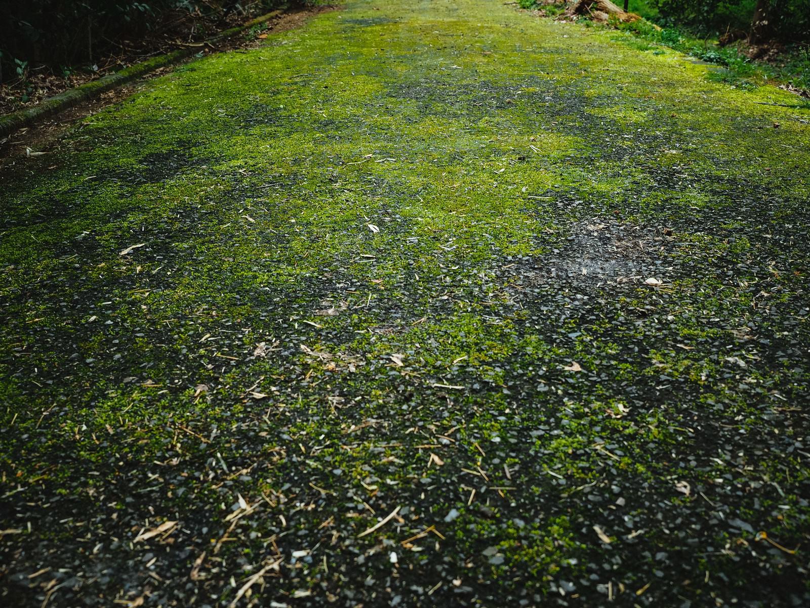 「苔むした道路」の写真