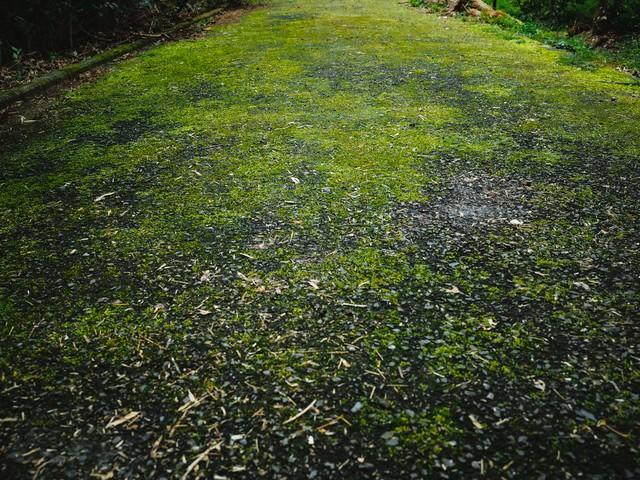 苔むした道路の写真