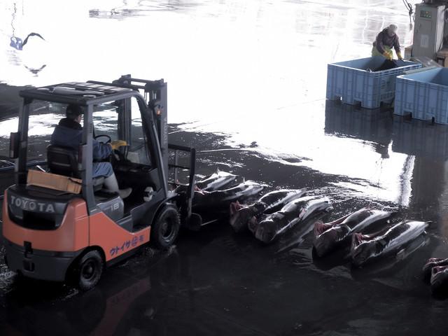 サメ(フカ)を片付ける卸市場の風景の写真