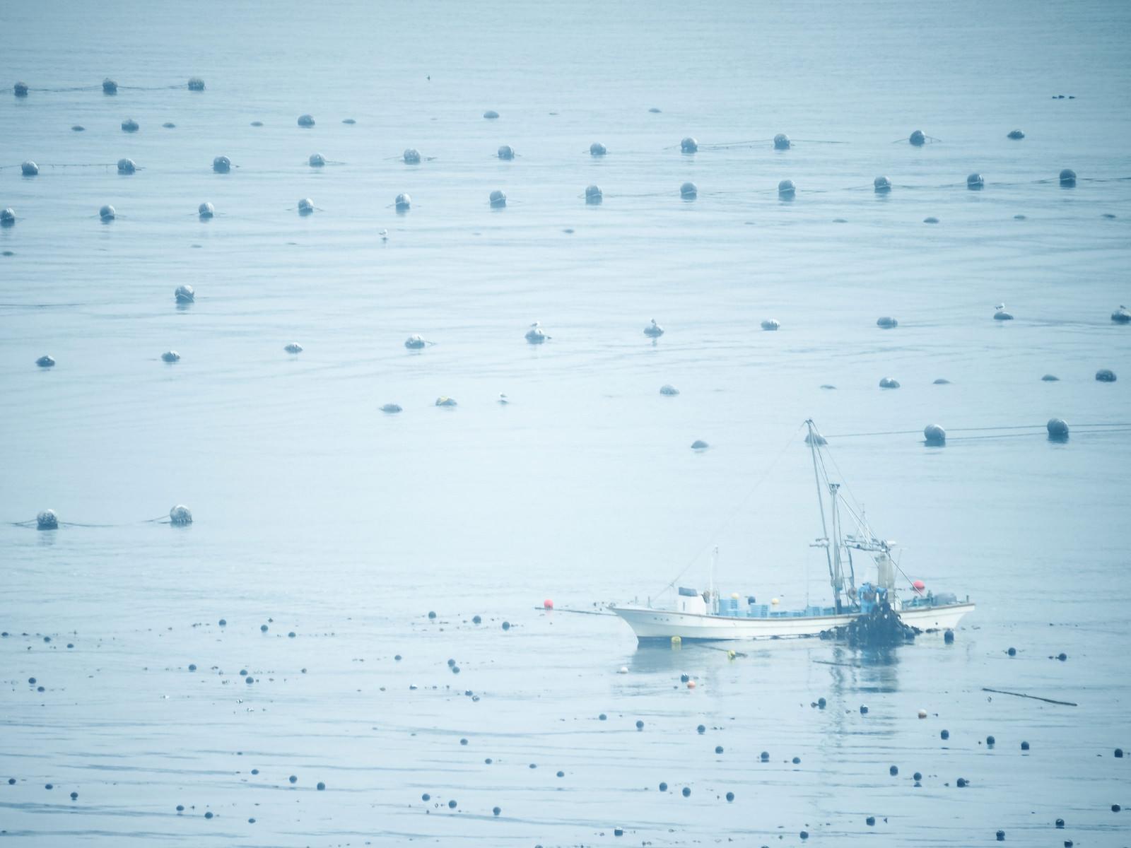 「志津川湾で漁に出る漁船」の写真