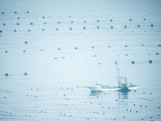 志津川湾で漁に出る漁船の写真