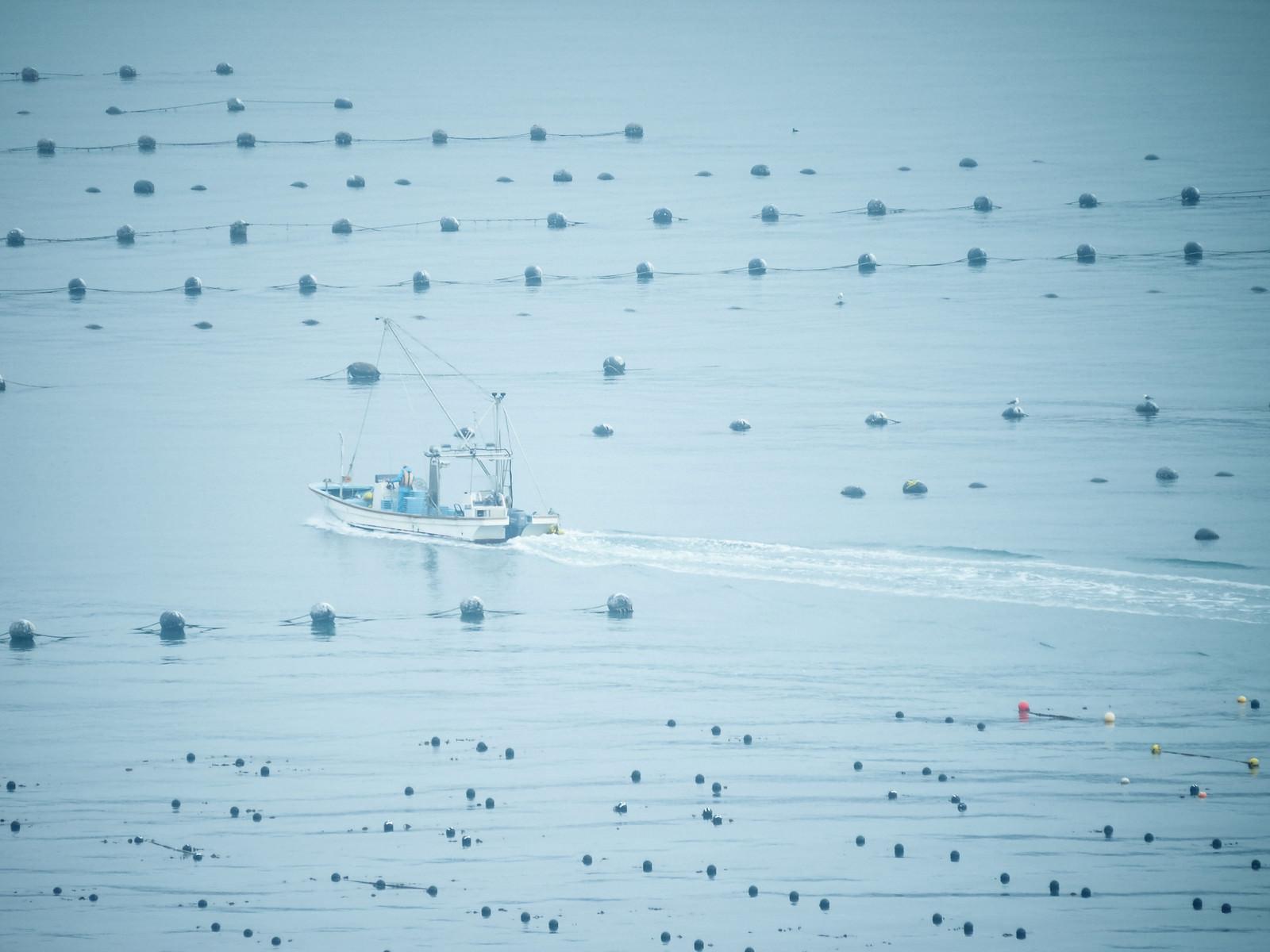 「穏やかな志津川湾と漁船」の写真