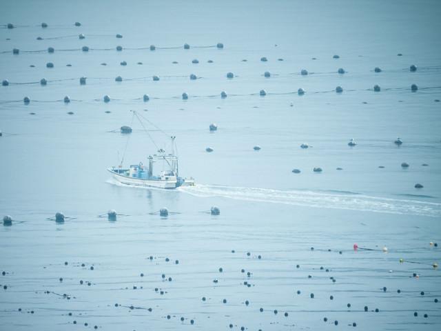穏やかな志津川湾と漁船の写真