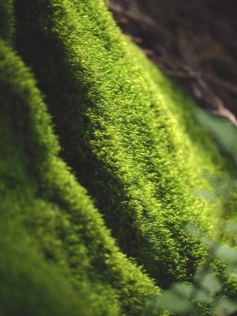 「木漏れ日を浴びる苔」の写真