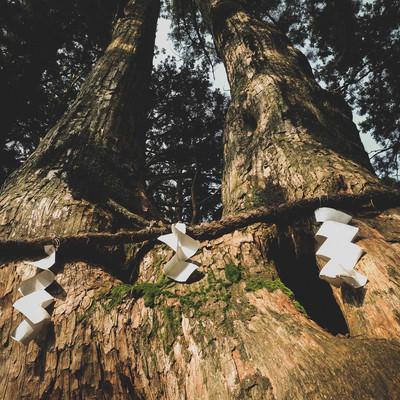 樹齢750年の夫婦杉(玉置神社)の写真
