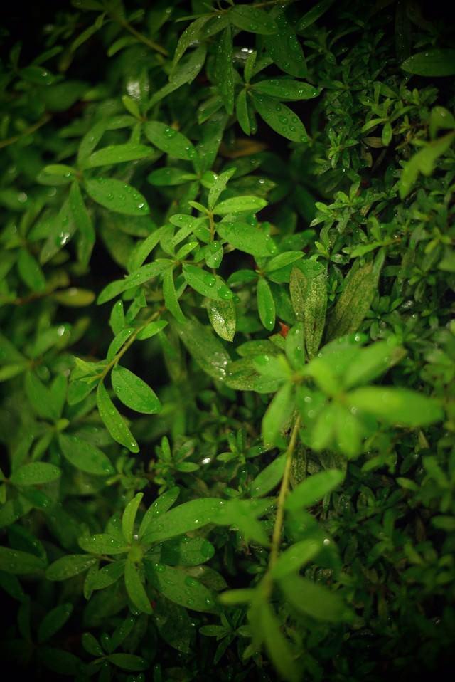 雨に濡れた植物の写真