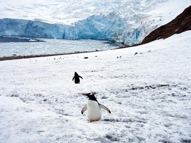 ニコハーバーの氷河とペンギンの写真