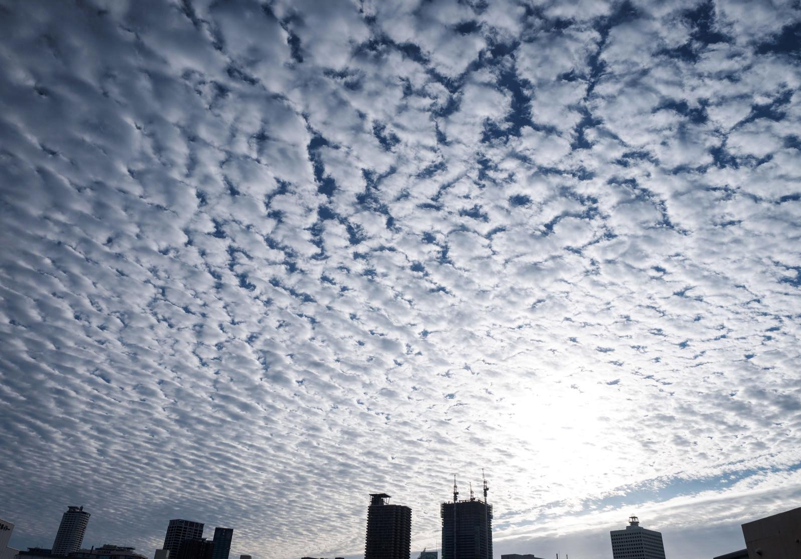 「一面のうろこ雲(巻積雲)」の写真