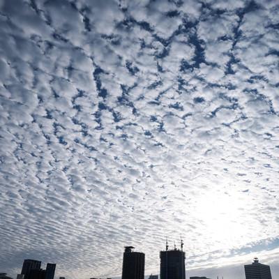 「一面のうろこ雲(巻積雲)」の写真素材