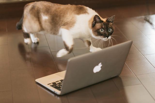 出向先に馴染めず逃亡寸前の猫エンジニアの写真