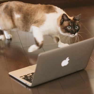 「出向先に馴染めず逃亡寸前の猫エンジニア」の写真素材